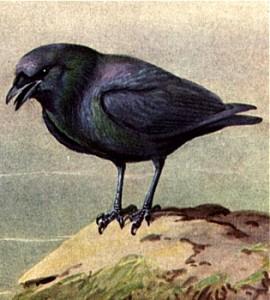 Bird Animal Totems – Psychic Library ~ Beyond Books