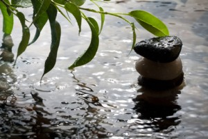 Green plant and pebbles with waterdrop and ripples